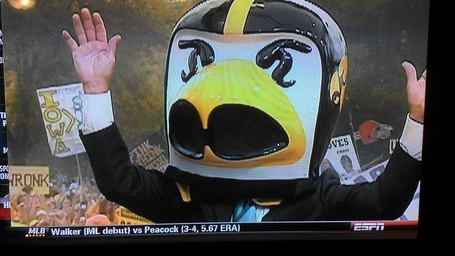 Corso_herky_head_medium