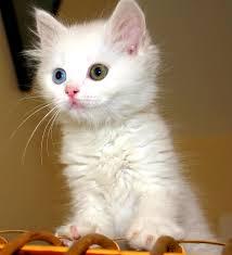 Cat_medium