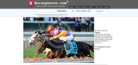 Horsephotos_medium