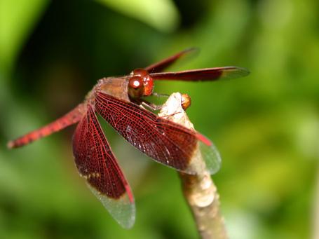 Dragonfly2_medium