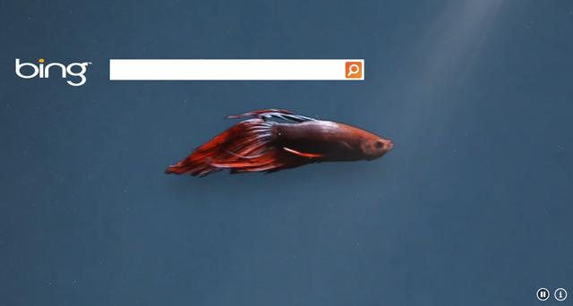 Windows 8 betta fish