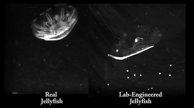 engineered jellyfish
