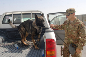 Military Dog (401st_AFSB/Flickr)