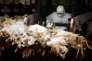 Bird Flu SHUTTERSTOCK
