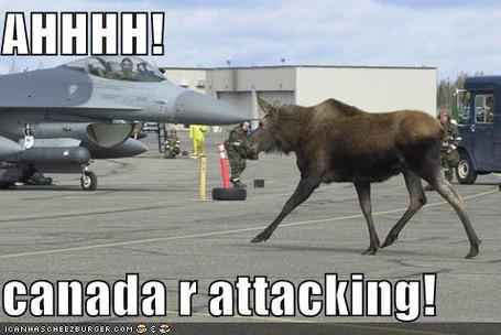 Funny_pictures_moose_jet_planes1331828178_medium