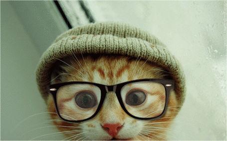 Hipster-cat_medium