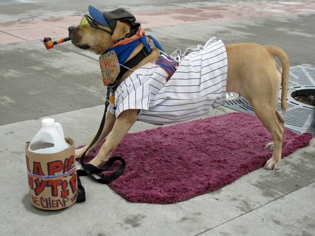 006_metsdog_citifield_medium