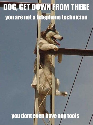 Buzzkill-dog-get-down-from-there_medium