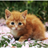 Com_aq_aqycutecat____294879_medium