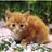Com_aq_aqycutecat____294879_medium