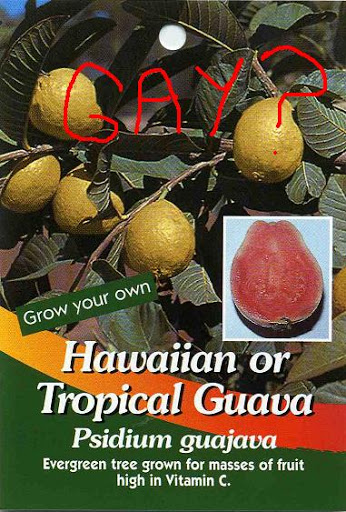 Guava_2520gay_jpg_medium
