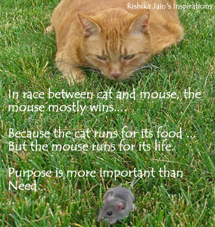 In-race-between-cat-and-mouse_medium