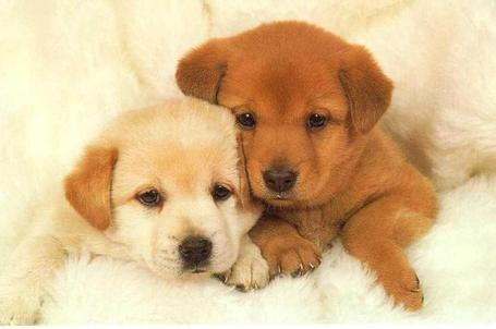 Puppies_1_medium