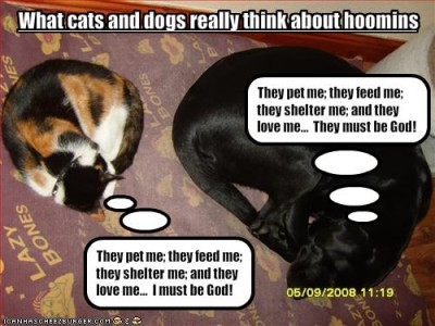 Funny-pictures-cats-and-dogs-think-differently-12-400x300_medium