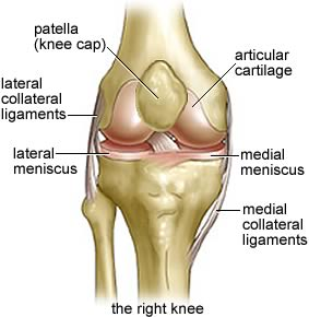Seif_knee_20anatomy01_medium