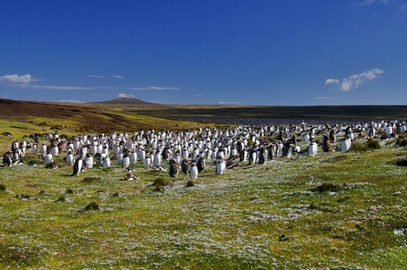 Falkland-islands_medium
