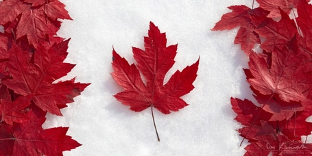 Leaf_flag_1200x600_wm-1024x512_medium