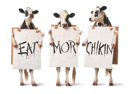 Eat-mor-chikin_medium