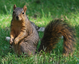 Home_page_squirrel2_medium