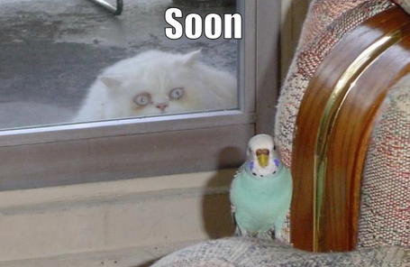 Soon-white-cat-green-parrot_medium