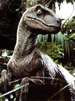 Raptor_medium