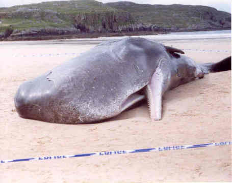 Beached-whale_medium