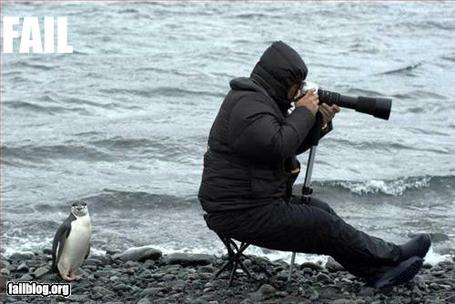 Fail-owned-penguin-photographer-fail_medium