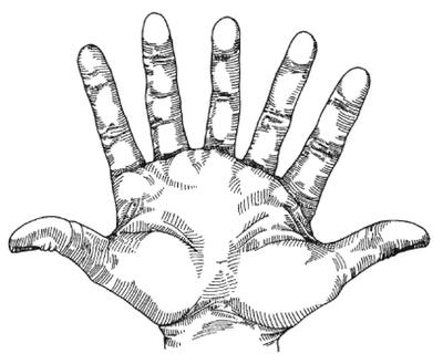Seven_fingered_hand_gif_medium