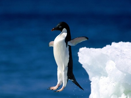 Leap_of_faith_2c_adelie_penguin_medium