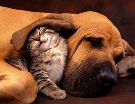 Cat-and-dog-best-friends1_medium