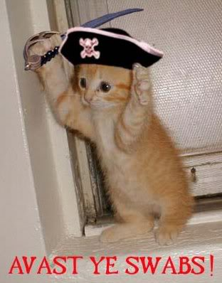 Pirate_kitten_03_medium