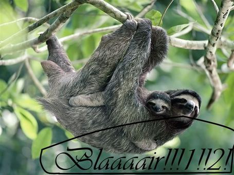 800-brown-throated_three-toed_sloth_medium
