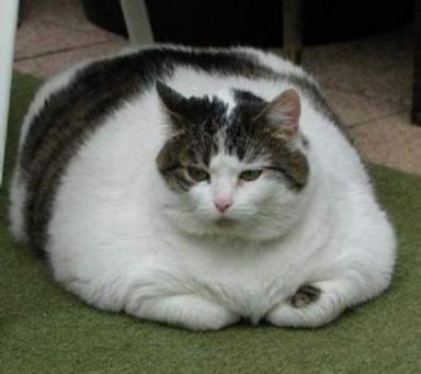 Fat_cat_4_medium