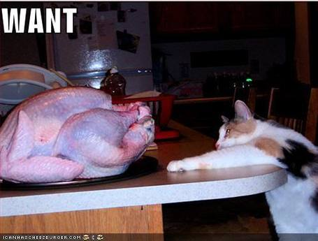 Funny-pictures-cat-wants-turkey_medium