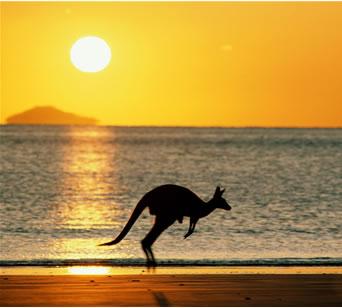 Australia_kangaroo_medium