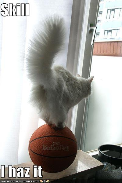 Funny-pictures-cat-balances-basketball_medium