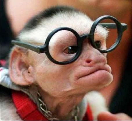 Animalimages_funny_monkeys_100_medium