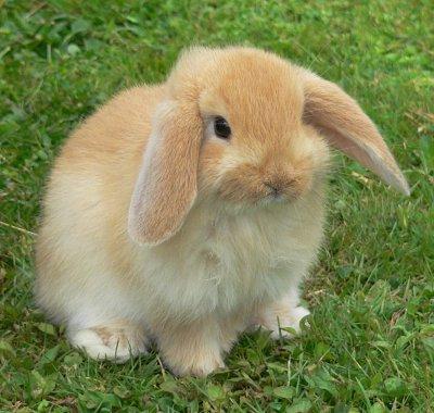 Bunny1_medium