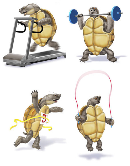 Tortoise_race_medium