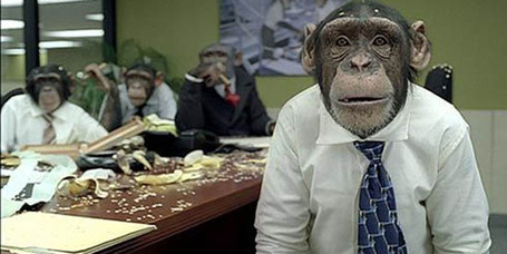 Monkey_office_1a_medium