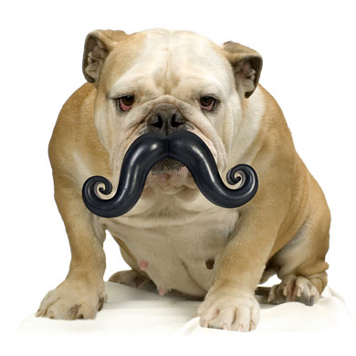 Dog-ball-and-moustache-016_medium