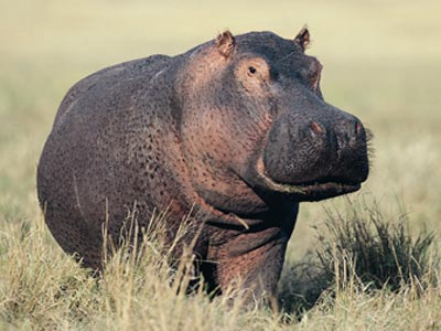 Hippo-sunscreen-1_medium