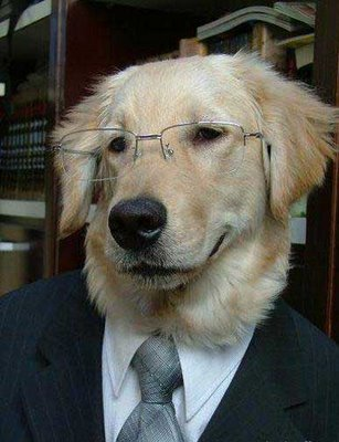 Professor_dog_medium
