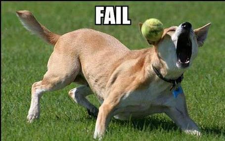 Dog-catch-fail_medium