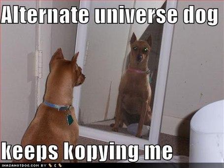 Funny-dog-pictures-alternate-universe-dog_medium