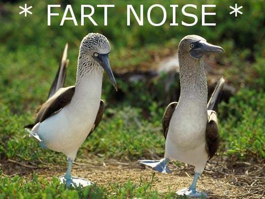 fart_noises