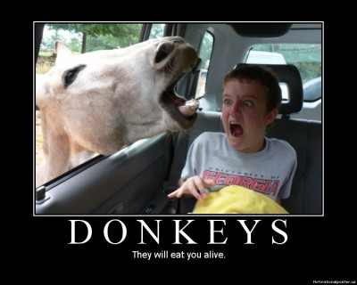 Motivationalposters-donkeys-400x320_medium
