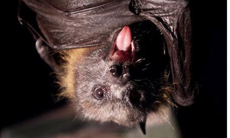 Bat-001_medium