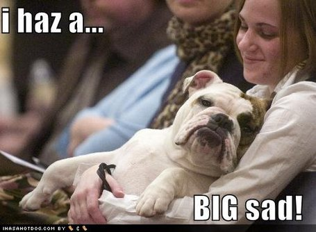 Funny-dog-pictures-big-sad_medium