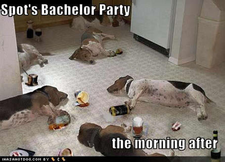Funny-dog-pictures-bachelor-party_medium